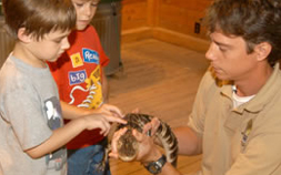 An Audubon Nature Institute volunteer shows a baby alligator to 2 small boys.