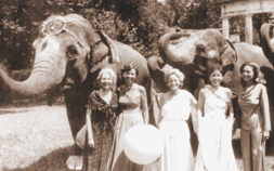 5 ladies dressed in formal attire, stand in front of 2 elephants while attending the first Whitney Zoo-to-Do at Audubon Zoo.