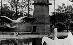 Pelicans play in the water at the Flight Cage at Audubon Zoo in a historical photo.