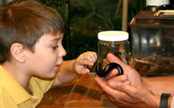 An Audubon Nature Institute volunteer shows an insect to a curious toddler.