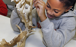 A young girl smiles and holds the jawbone of an animal as part of the Audubon Zoo's Betty Wisdom Resource Room.