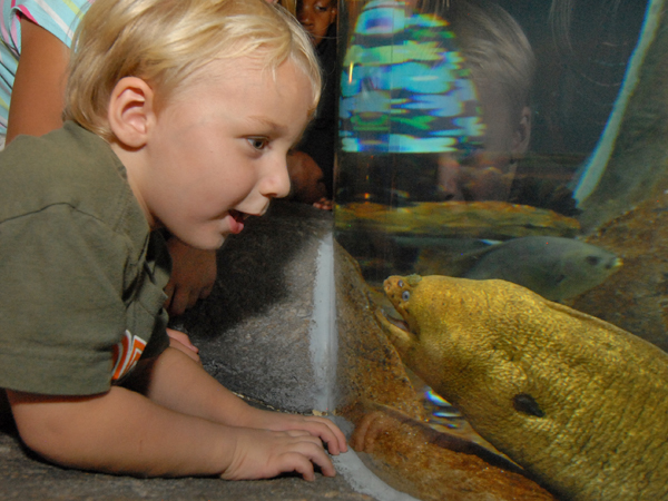 A little boy looks closely into the Deep Grotto at a California moray eel.