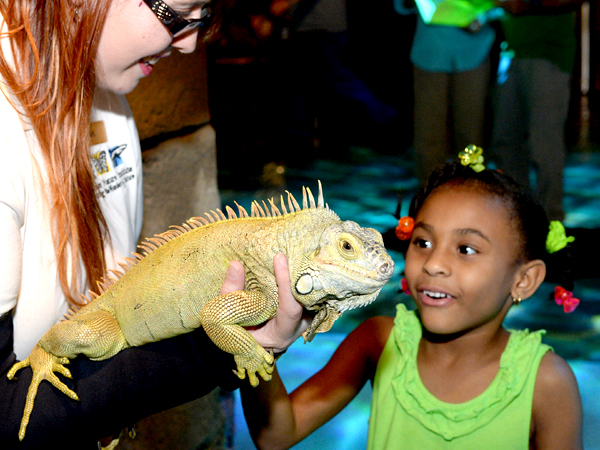 Image Of Kids Birthday Parties In New Orleans At The Aquarium - Audubon Nature Institute Picture Of Animals Watching During A New Orleans Kids Activity At The Zoo - Audubon Nature Institute