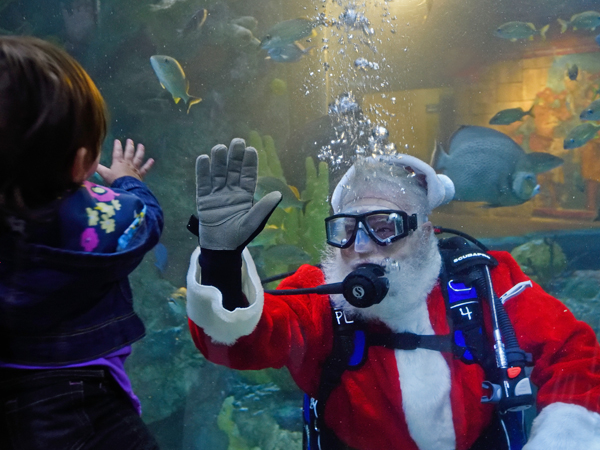 Santa Clause dives in the tank at the Audubon Aquarium of the Americas and waves at a small child.