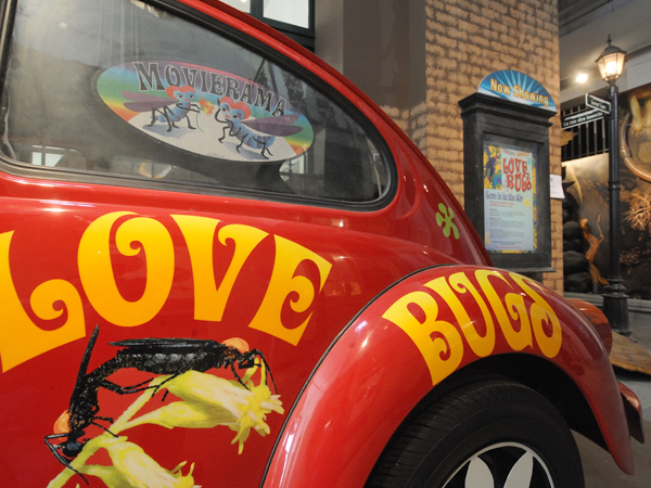 A red Volkswagen Beatle decorated with love bugs parked outside the Insects of New Orleans at the Audubon Butterfly Garden and Insectarium.