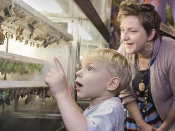 A little boy points to an exhibit at the Audubon Butterfly Garden and Insectarium.