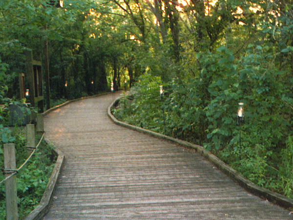 A boardwalk trail winds through a beautiful green forest at Audubon Louisiana Nature Center.