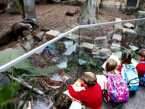 3 children crouch down and inspect an anteater at the Audubon Zoo.
