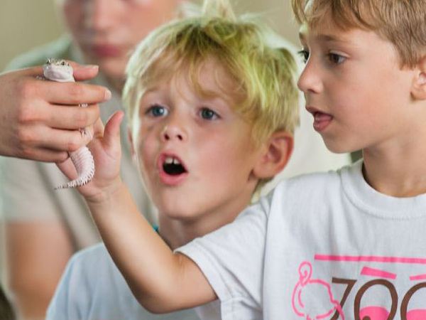 Photo Of Boys With Gecko At Kids Camp - Audubon Nature Institute