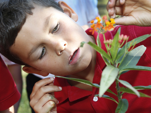 A boy in a red shirt studies a plant with orange flowers at the Audubon Nature Institute.