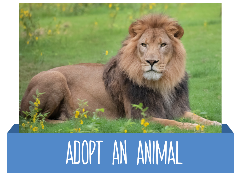 Adopt an Animal button