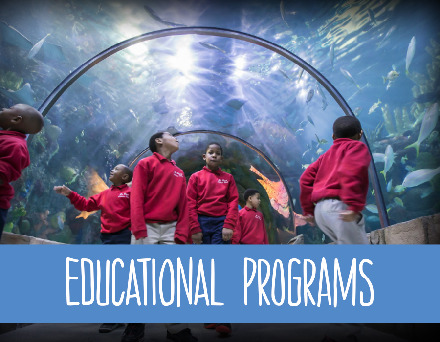 Icon for Education, features a group of students walking through the tunnel at the Audubon Aquarium of the Americas