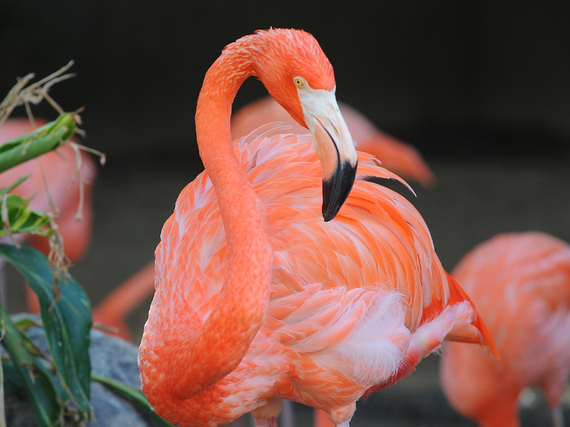 Flamingo Exhibit