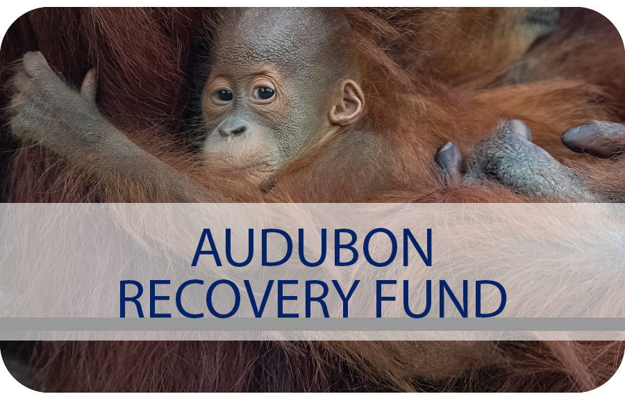 Audubon Recovery Fund Button