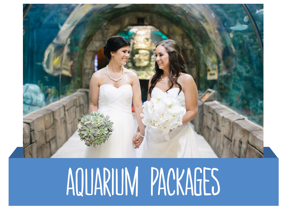 Aquarium Packages Button