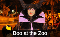 A women dressed in a purple and black witch's costume while attending Audubon Zoo's Boo at the Zoo event.