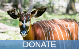 Icon for Donate, featuring a Bongo.