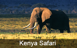 Kenya Safari Trip of a Lifetime