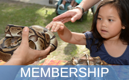Icon for Membership, featuring a little girl reaching out to pet a snake.