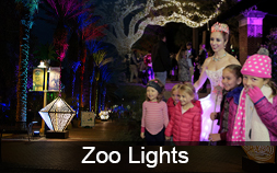 Light up the Season with Audubon Zoo Lights
