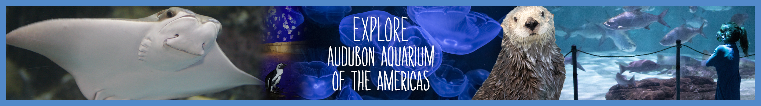 aquarium-explore-header-slider