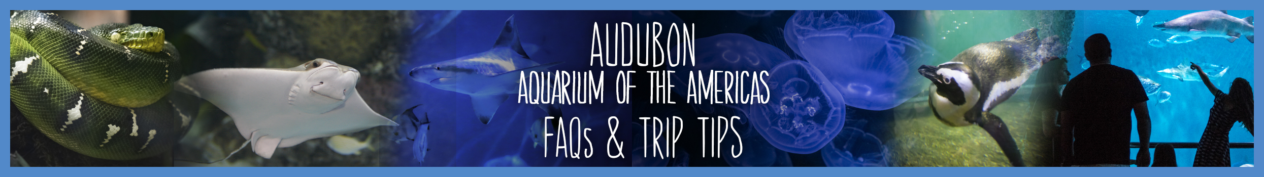 aquarium-faq-header-slider