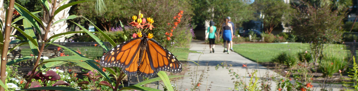 A garden in Audubon Park with a butterfly on the flowers