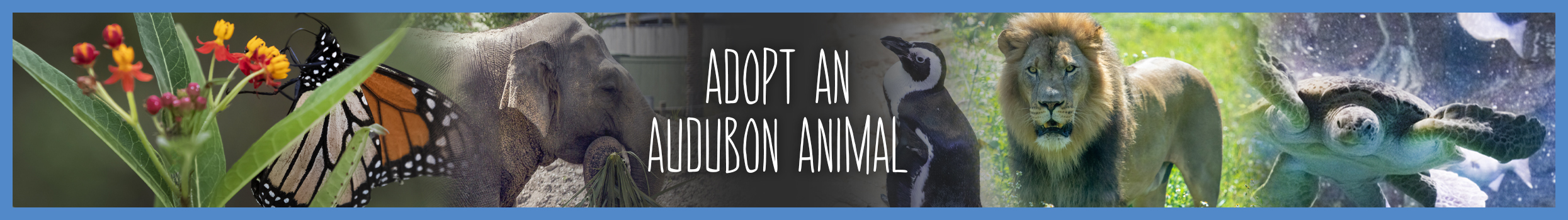 header_image_-_Adopt-An-Animal