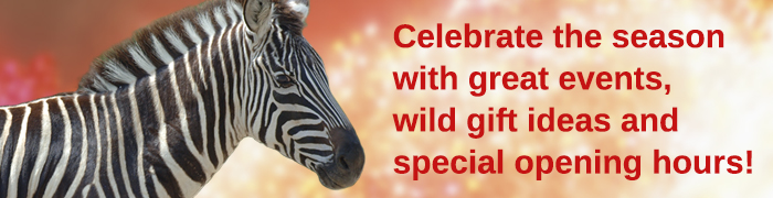 Header of a zebra with the words Celebrate the season with great events, wild gift ideas and special opening hours.